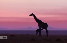 Good morning Masai Mara 6 by Libor Ploček on 500px