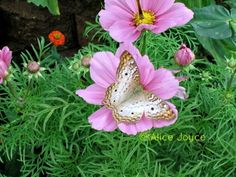 """""""The atmosphere is pure magic, as butterflies swoop and flutter about the gallery."""" From Alice's Garden Travel Buzz"""