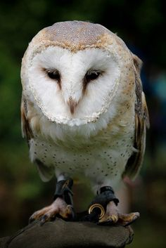 Free Pictures, Free Images, Hedwig, Nocturne, Predator, Owl, Bird, Friends, Animals