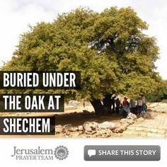 Buried Under the Oak at Shechem - Jerusalem Prayer Team Article