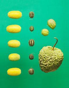 food-photography-maren-caruso-5.jpg