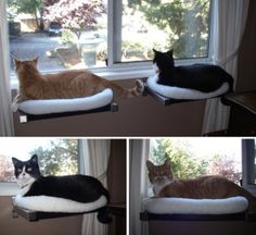 DIY Cat Window Perches