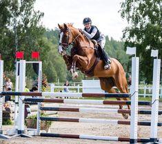 Pinterest ➳  Equestrian Performance
