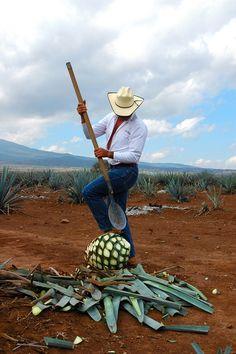 20 de lucruri despre lume: de la izvorul-curcubeu la cea mai veche așezare din Europa #tequila
