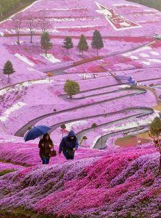 Awesome flower fields Nonkeyland in Hokkaido Hokkaido, Japan♥(¯`╰⊰✿´ ╰⊰✿´╰⊰✿´╰⊰✿´╰⊰✿´╰⊰✿´♥(¯`╰⊰✿´♥(¯`╰⊰✿´ ╰⊰✿´╰⊰✿´╰⊰✿´╰⊰✿´╰⊰✿´♥(¯`╰⊰✿´