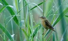 More than a quarter of UK birds face extinction risk
