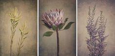 stills. ‹ Natascha van Niekerk Fine Art Photography