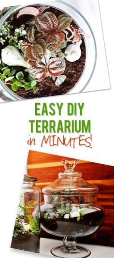 DIY Terrarium! LOVE the idea of bringing the garden inside and it makes the most beautiful decor addition!