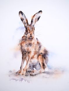 Hare in watercolour painted by artist Jane Davies