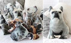 Make it! Pet Pillows - I'm sure everyone would love a pet pillow for Christmas ;)