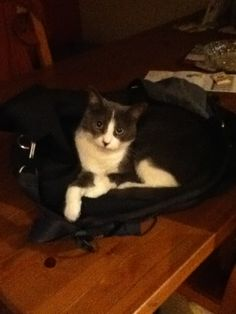 Mademoiselle Cat | Pawshake