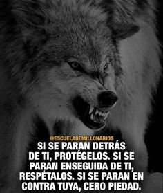 Life is this easy Wolf Quotes, Joker Quotes, Animal Quotes, Der Steppenwolf, Alpha Romeo, Wolf Life, Motivational Quotes, Inspirational Quotes, General Quotes