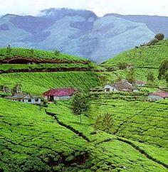 Beautiful pictures from Munnar. Have a Good Time in Munnar, Kerala.   visit http://goodtimekerala.com