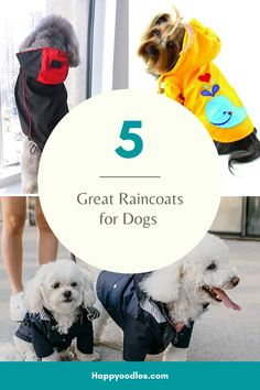 5 Great Raincoats for Dogs I dread the thought of walking the dog in the rain. Rain and fur just do not go together. At best is it a recipe for muddy floors and wet dog smells. If you have a doodle ty Pet Dogs, Pets, Chihuahua Dogs, Cute Dog Toys, Dog Accesories, Dog Breeds List, Dog Smells, Dog School, Buy A Dog