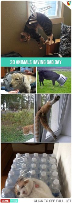 20 Animals Having a Bad Day #animals #pets #badday #funnypics #funnypictures #humor #bemethis