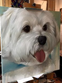 Working on a Maltese large 3ft by 3ft canvas Dog art pet portrait. www.marysparrow.com for commission.