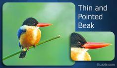 thin and pointed beak