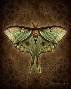 Steampunk Luna Moth - Art Print - Brigid Ashwood. $15.00, via Etsy.