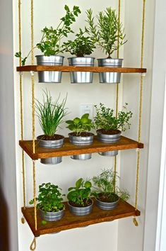 Condo Living Essentials: Converting the Unused to Usable When you create a he. - Condo Living Essentials: Converting the Unused to Usable When you create a herbal area, the foll - House Plants Decor, Plant Decor, Hanging Plants, Indoor Plants, Small Plants, Herb Garden Indoor, Hanging Herb Gardens, Indoor Gardening, Balcony Garden