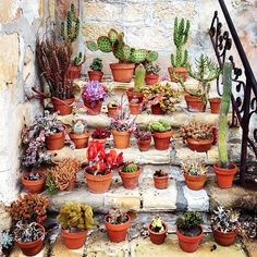 planters and succulents