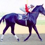 Ruffian the mare that won our hearts