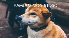 Have fun with this Famous Dog Bingo – complete with calling cards! Can you and your students figure out which TV and movies all the dogs are from?