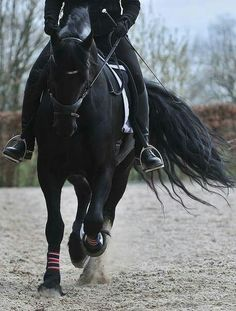 Unique and creative beautiful black horse pictures Best Picture For Horse Riding Photography For Your Taste You are looking for something, and it is going Cute Horses, Pretty Horses, Horse Love, Horse Girl, Beautiful Horses, Animals Beautiful, Horse Photos, Horse Pictures, Dressage Horses