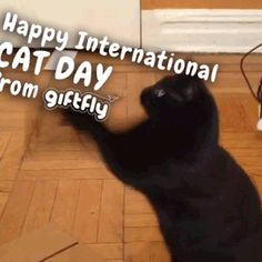 Happy International Cat Day from our very own lead graphic designer, Tracy's cat! #daysoftheyear #catday