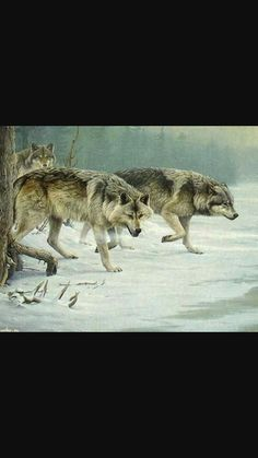 Realistic wolf painting