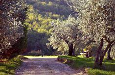 #Umbria, #Spoleto e dintorni: un agriturismo che sa di casa www.delquondam.it