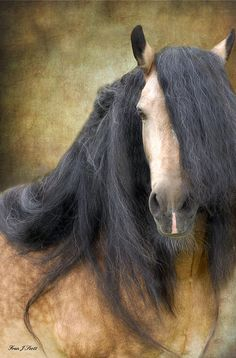 The Stallion Photograph  by  Fran J Scott.........My hair will never be that fabulous....