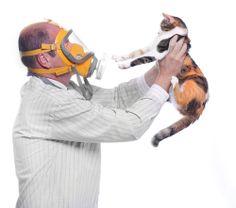 Alergia à saliva de gatos: nem sempre os pelos são os culpados. Saiba mais aqui!