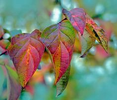 Fall leaves in delicious colors