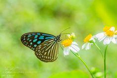 .o...Butterfly...o. by WarayutPachsri. @go4fotos