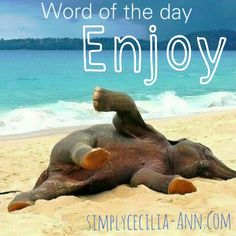 Never forget to apreciate and enjoy the small things in life- Simplycecilia-ann.com