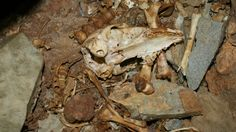 ontario human remains found - HD2896×1632