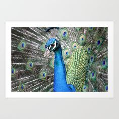 Stunner Art Print by Whittle Photography
