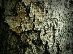 Textura árbol