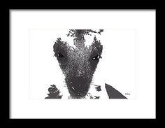 david bridburg,music notes 28,intimate view of jayne the kangaroo,marsupial,macropodidae,macropods,large foot,macropus,red kangaroo,antilopine kangaroo,eastern grey kangaroo,western grey kangaroo,wallaroo,wallaby,polyphyletic grouping of species,marsupiam,animalia,chordata,mammalia,marsupialia,diprotodontia,macropodidae,macropus,macropus,osphranter