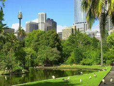 http://www.wallpaperpimper.com/wallpaper/Places/Australia/Sydney-Botanic-Garden-1-1400x1050.jpg