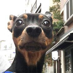 * * Good Morning☁️ * * 肌寒くてどんより曇り空 *  1時間以上歩いても帰りたがらないので 抱っこして強制終了😆 * *  Have a nice one👍 * * #ミニピン #ミニチュアピンシャー #ブラックタン #愛犬 #犬 #いぬ #わんこ #minipin #instadog #ilovemydog #dogstagram #pets #doglover #dogs #lovely #instapet #lovemydog #미니핀 #dogsofinstagram #minipinstagram #おはよう #goodmorning #あさんぽ