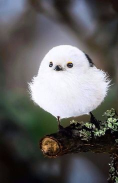 Finnish Photographer Shoots Real Life Angry Birds, And We Can't Finish Looking At Them Ossi Saarinen is a nature photographer based in Finland. He has been photographing different types of wild animals in Finnish nature but his bird photos always Cute Birds, Pretty Birds, Beautiful Birds, Animals Beautiful, Pretty Animals, Exotic Birds, Colorful Birds, Exotic Animals, Nature Animals