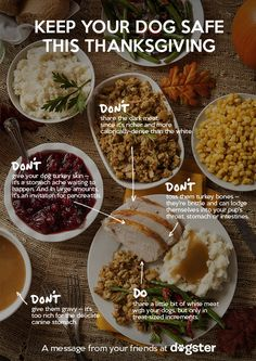 For Thanksgiving, help spread the word on food safety for dogs! (Courtesy of Dogster.)