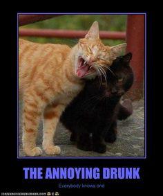 Annoying Drunk Cat