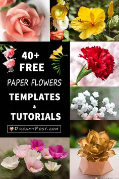 This is a great collection of gorgeous free paper flowers templates and tutorials, so you can learn how to make flowers from paper and simple suppliers.Best paper flowers you will see with jaw drop, must seeThese are the best paper flowers that have Wafer Paper Flowers, How To Make Paper Flowers, Large Paper Flowers, Tissue Paper Flowers, Paper Roses, Paper Peonies, Paper Flowers Wedding, Origami, Handmade Flowers