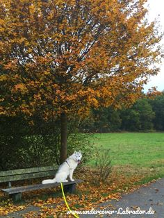 Das verflixte Thema Rückruf – unsere Tipps- wie euer Hund zuverlässig kommt – Undercover Labrador