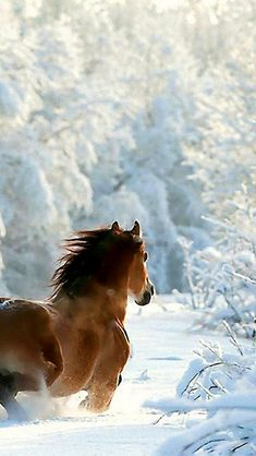 Enjoy an exciting winter holiday that combines horse riding and ski. In Borovets Bulgaria you have everything to enjoy a unique and memorable ski holiday. #ski #horse #snow