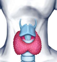 Facts About Thyroid: Hashimoto & other things