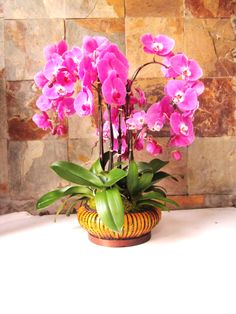 Make an impression with this blast of fuchsia Phalaenopsis live plants. Last for up 2 months if properly cared for. Call us for custom order. Orchid Plants, Orchids, Orchid Arrangements, Plant Design, Live Plants, 2 Months, Flowers, How To Make, Beautiful