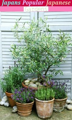 Best Garden Site - Garden Types, Diy Garden, Garden Cottage, Garden Projects, Tree Garden, Balcony Garden, Garden Planters, Herbs Garden, Potted Garden